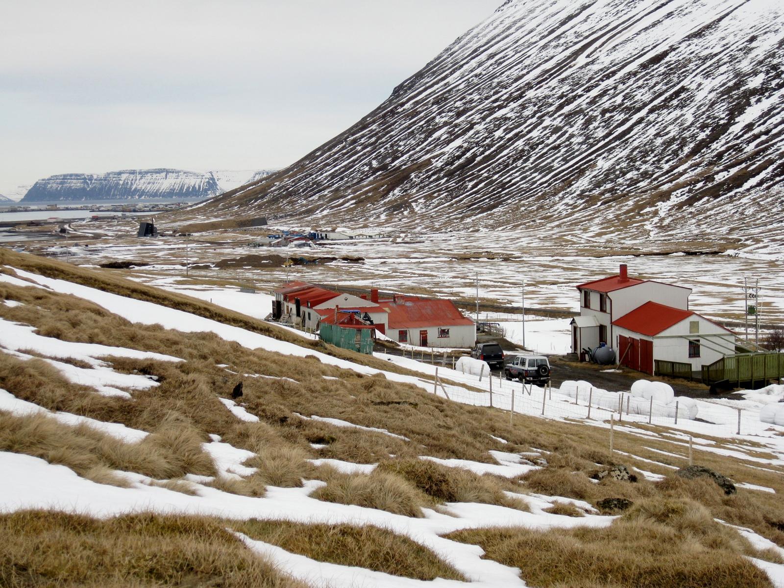 Farm-Iceland